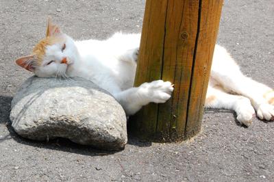 ネコと動物愛護チャリティーカレンダー2011-8月