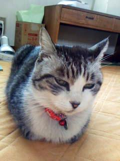 ボランティアさん宅の猫さん