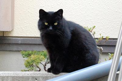 ボラティアさんがお世話している猫さん