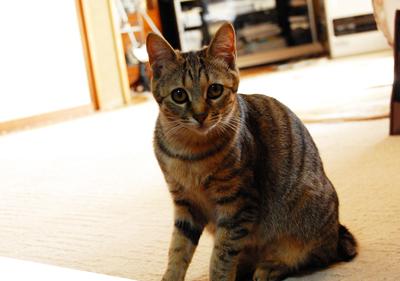 ボランティアさん宅の猫ちゃん