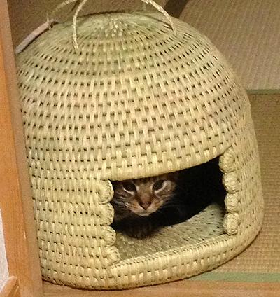 猫つぐら(猫ちぐら)3