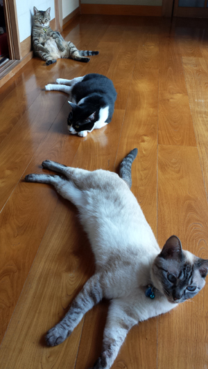 猫さん3匹♪