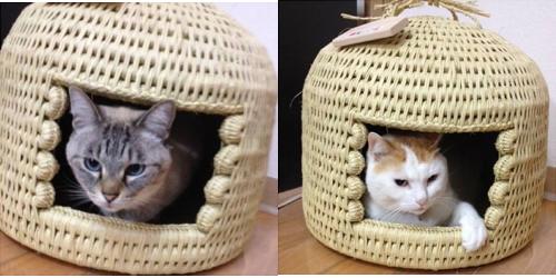 猫つぐら(猫ちぐら)お客様より