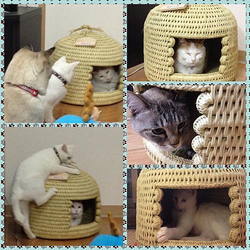 猫つぐら(猫ちぐら)お客様からの写真