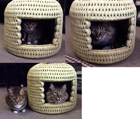 猫つぐら(猫ちぐら)お客様より写真