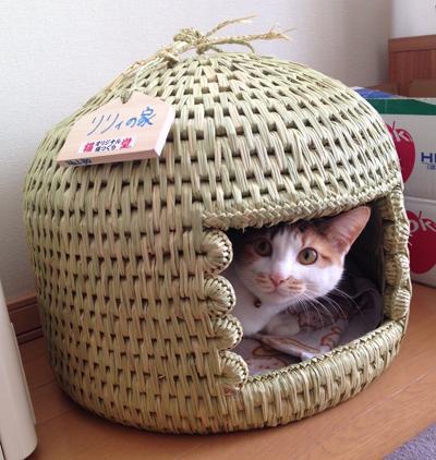 猫ちぐら(猫つぐら)お客様より写真1