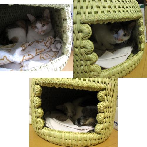 猫つぐら(猫ちぐら)写真2
