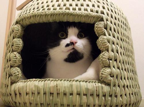 猫つぐら(猫ちぐら)お客様より3