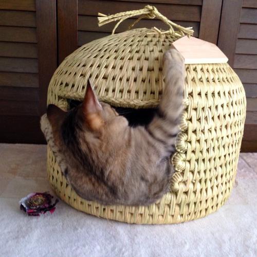 猫つぐら(猫ちぐら)お客さまの声2