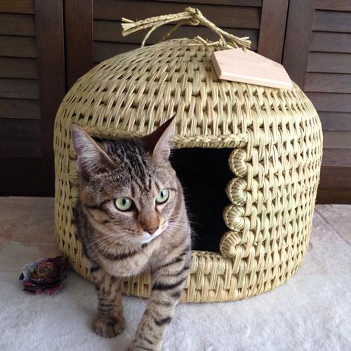 猫つぐら(猫ちぐら)お客さまの声4