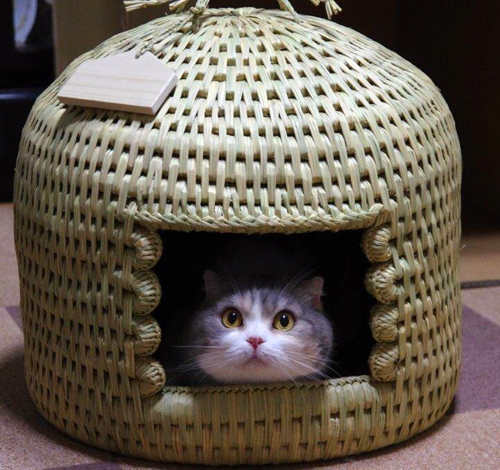 猫つぐら(猫ちぐら)お客さまの声1