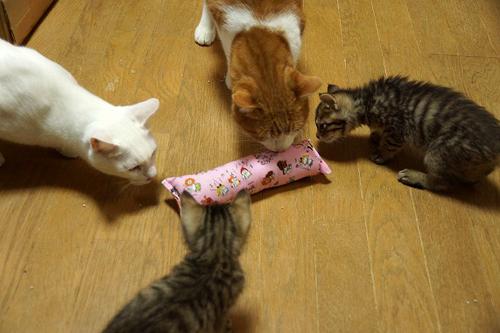 おとな猫さんも子猫ちゃんも