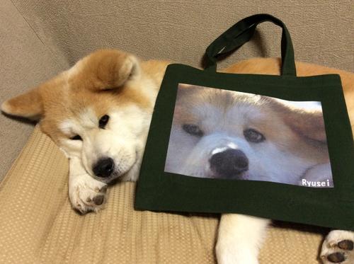 ペットのオリジナル写真をプリント!キャンバスバッグ