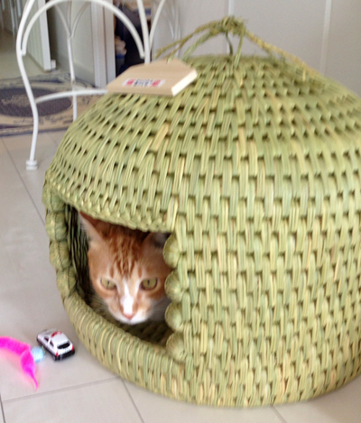 猫堂オリジナル猫つぐら(猫ちぐら)お客さまより猫ちゃんお写真
