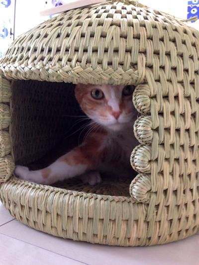 猫堂オリジナル猫つぐら(猫ちぐら)お客さまより猫ちゃんお写真2