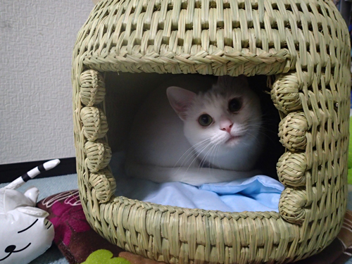 猫つぐら(猫ちぐら)お客さまより 猫のゆきちゃん1