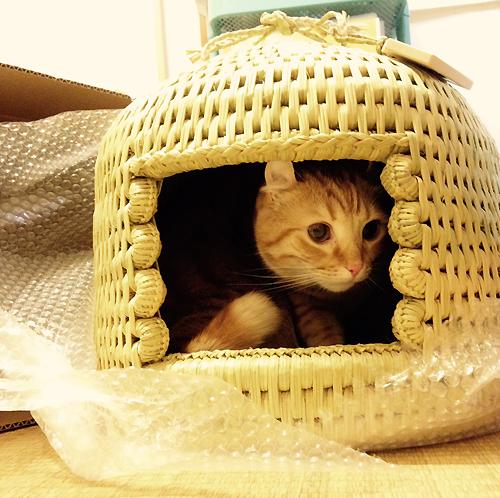 猫つぐら(猫ちぐら)お客さまより写真1