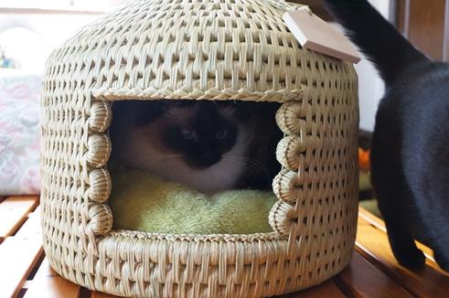 猫つぐら(猫ちぐら) 沙羅(しゃら)ちゃん