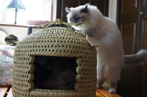 猫つぐら(猫ちぐら) 花梨(かりん)ちゃん