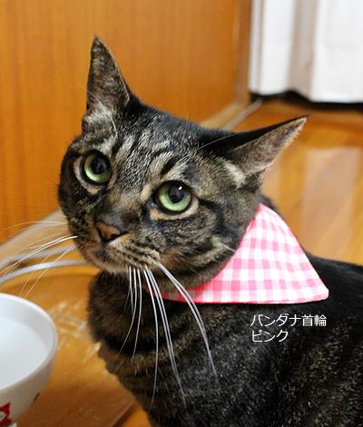 おしゃれバンダナ首輪 猫のちゃあ装着