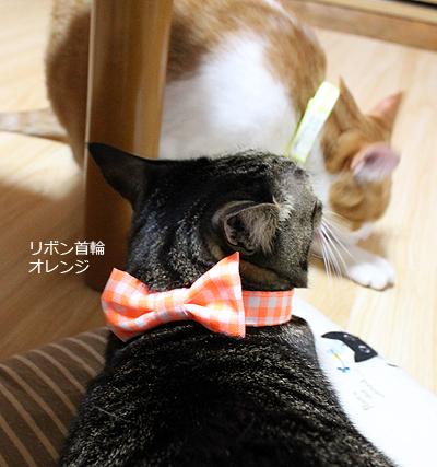 おしゃれリボン首輪 オレンジ 猫のめぐ装着