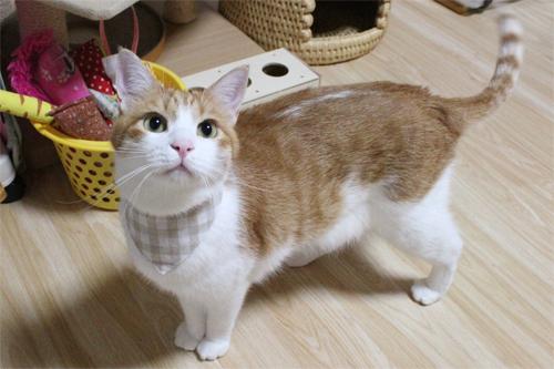 猫のおしゃれ首輪リバーシブルバンダナ 裏面装着例