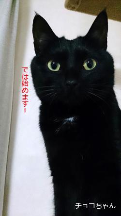 またたび入りミニミニキッカー、黒猫のチョコちゃん