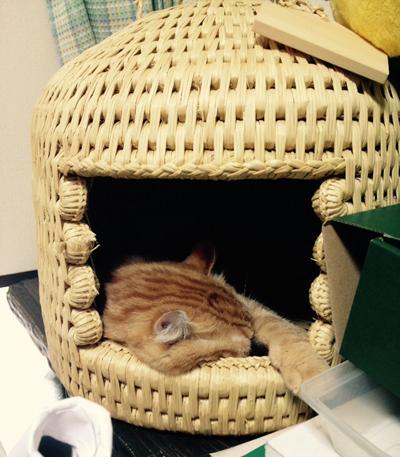 猫つぐら(猫ちぐら)お客さまよりネコちゃん写真