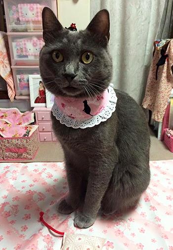 おしゃれ首輪2リバーシブルバンダナフリフリレース ピンク猫柄×ドットレッド1