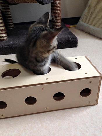 猫のおもちゃ、手作りチーズボックス3