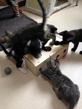 猫のおもちゃ、手作りチーズボックス4