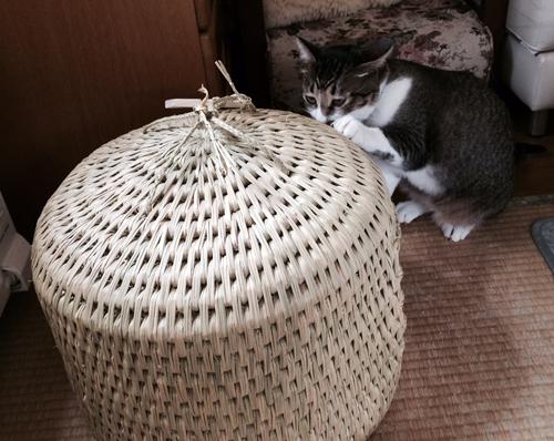 猫つぐら(猫ちぐら)お客さまより写真2