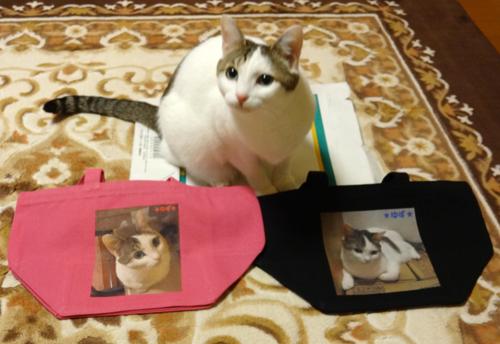 オリジナル写真プリント、キャンバスバッグと猫のゆずちゃん1