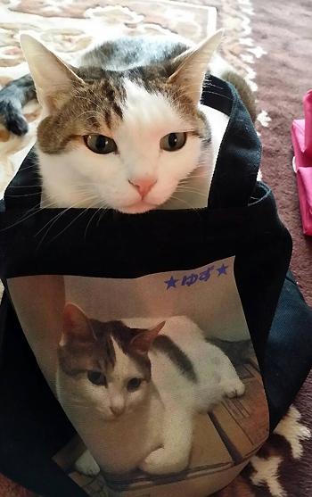 オリジナル写真プリント、キャンバスバッグと猫のゆずちゃん2