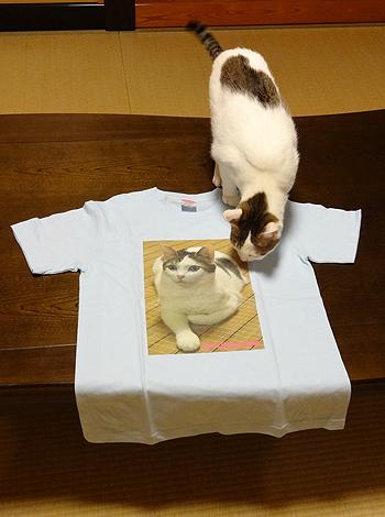 オリジナル写真プリント、Tシャツと猫のゆずちゃん