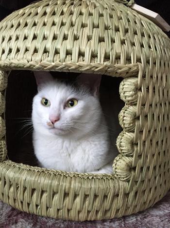 猫堂オリジナル猫つぐら(猫ちぐら)2015、お客さまよりご感想2