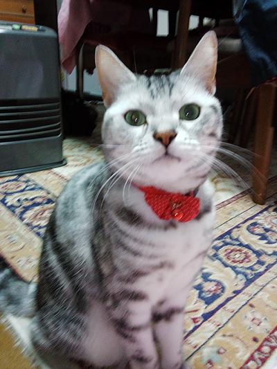 猫のキティちゃん