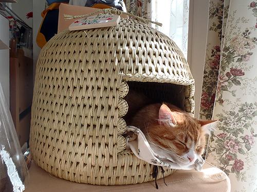 猫つぐら(猫ちぐら)猫のチーズちゃんより