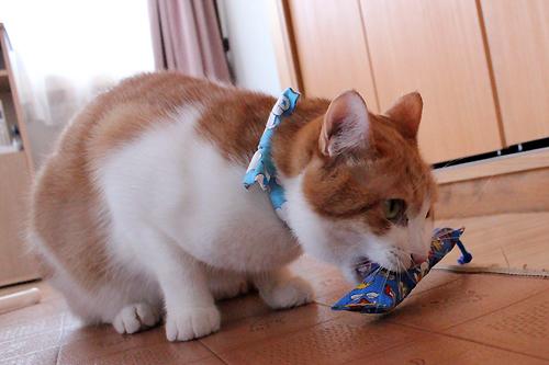 ミニミニキッカー(細長) 宝島、猫堂店員をちび