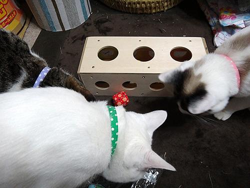 猫のガラガラと手作りチーズボックス