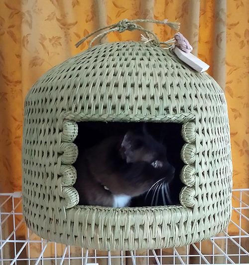 猫つぐら(猫ちぐら)お客様より猫写真