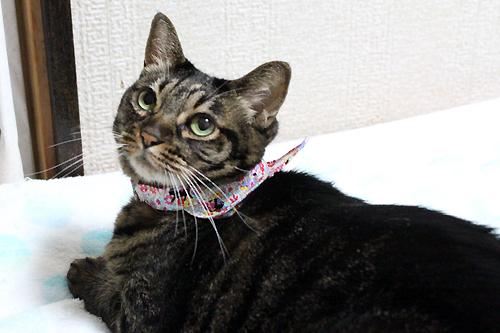 おしゃれバンダナ首輪、花園の猫ピンク(ちゃあ店長)