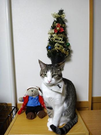 おしゃれ首輪2リバーシブルバンダナ 猫と音符アイボリー×ツリーグリーン2