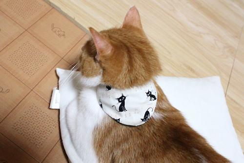 猫と音符アイボリー×ツリーグリーン、店員をちび1