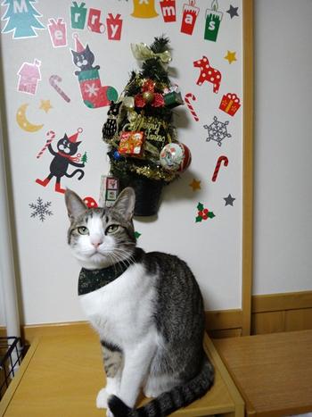 おしゃれ首輪2リバーシブルバンダナ 猫と音符アイボリー×ツリーグリーン