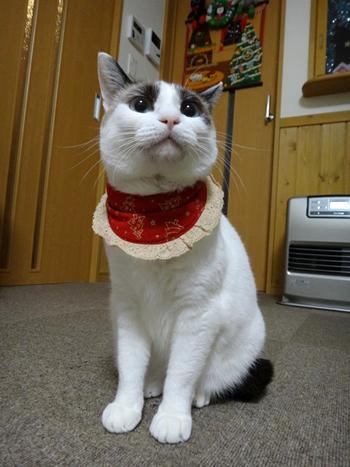 おしゃれ首輪2リバーシブルバンダナフリフリレース 猫と音符アイボリー×ツリーレッド、ベージュレース