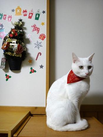 おしゃれ首輪2リバーシブルバンダナ 猫と音符アイボリー×ツリーレッド