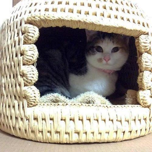 猫堂オリジナル、猫つぐら(猫ちぐら)2011年製作品