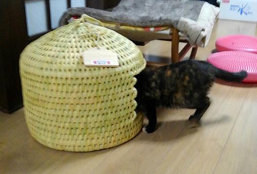 猫つぐら(猫ちぐら)2016、猫ちゃんよりお写真1