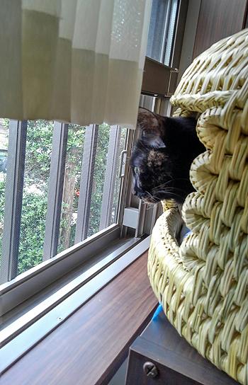 猫つぐら(猫ちぐら)2016、猫ちゃんよりお写真2